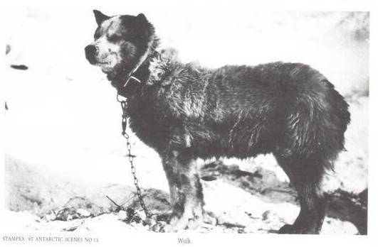 l-1911scottexpFO5